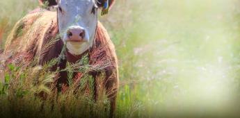 MSD Salud Animal llevará a cabo la 2ª. Edición de INSIGHTS que reúne a expertos de Latinoamérica