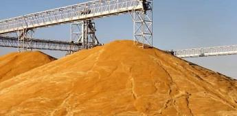 Terminó la cosecha triguera 2019-2020