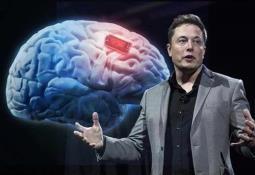 Neuronas artificiales, capaces de integrarse y funcionar