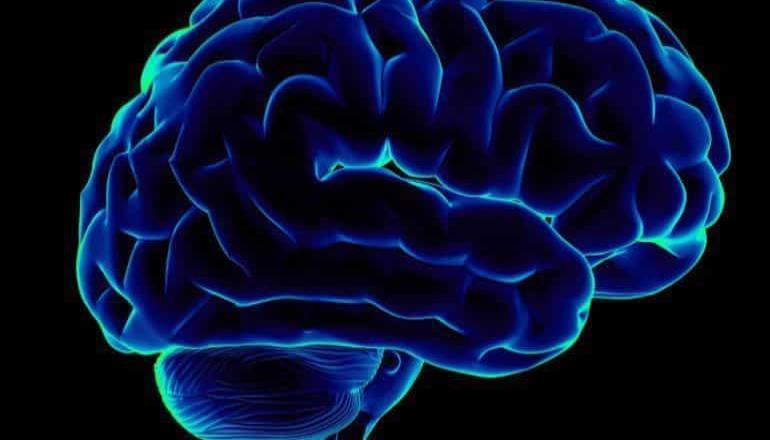 El cerebro tiene una función integrada y no separada: estudio