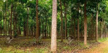 Retiran más de 700 árboles en restauración del Bosque de Chapultepec