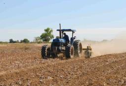 Reporta la Secretaría de Agricultura la siembra de 2,223 hectáreas de cebollín