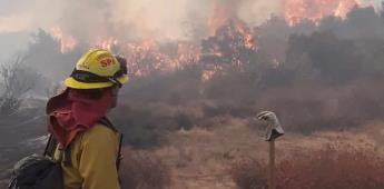 Brigadas forestales de la Secretaría del Campo atienden incendios en Tecate