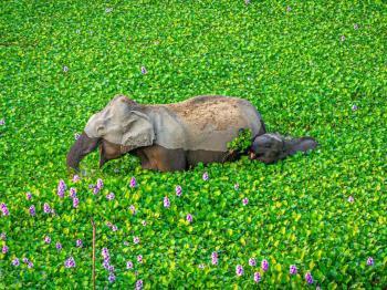 10 fotografías elegidas como las más divertidas del reino animal en 2020