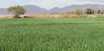 Emite Agricultura recomendaciones para el próximo ciclo otoño-invierno 2020-2021