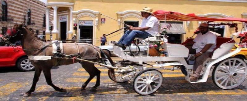 Sustituirán uso de caballos para arrastras calesas en Motul, Yucatán