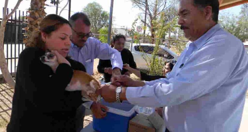 Próxima brigada de vacunación antirrábica será del 21 al 25 de Octubre: Secretaría de Salud