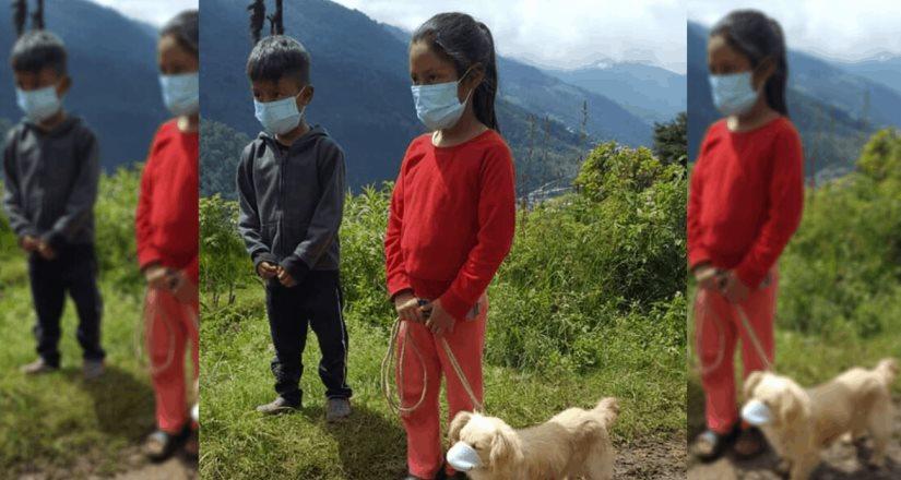 Perro es llevado a vacunar... con cubrebocas, en Guatemala