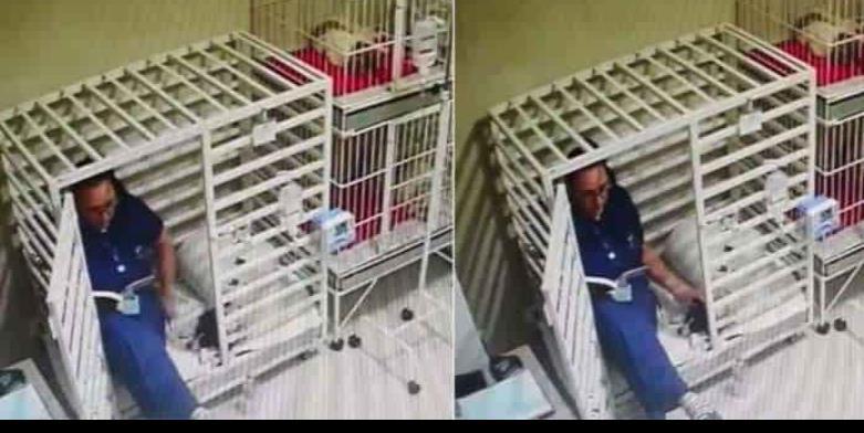 Doctora lee cuentos a perritos en una veterinaria de Brasil