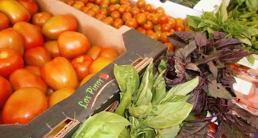 San Quintín, mayor productor de tomate en BC