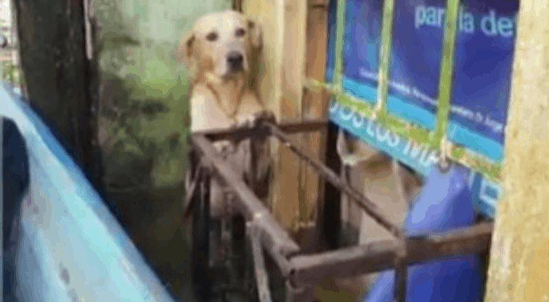 Elementos de la SEMAR se vuelven virales al rescatar a un perro dentro de la inundación