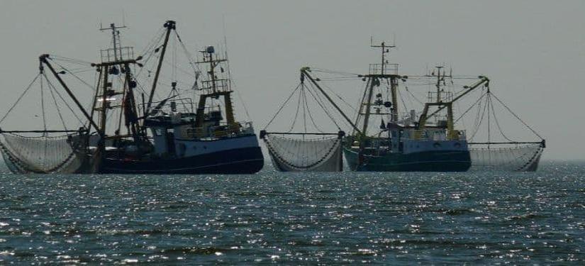 Crean bloque sudamericano contra pesca pirata de China y otros países