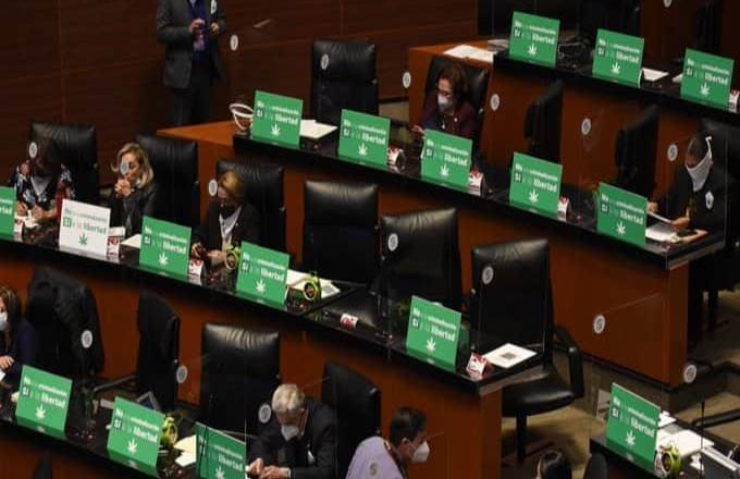 Senado aprueba despenalizar consumo de marihuana; pasa a San Lázaro