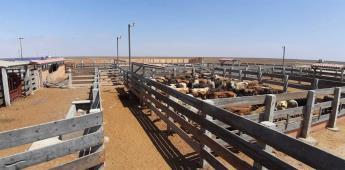 Secretaría del Campo continua fortaleciendo estatus Fito y zoosanitario de Baja California