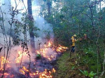 Por incendios forestales, declaran emergencia en Oaxaca