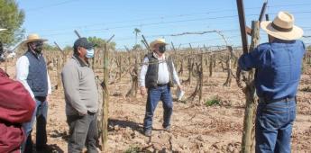 Secretaría Del Campo capacitó en Manejo agronómico del cultivo de Vid en el Valle de Mexicali