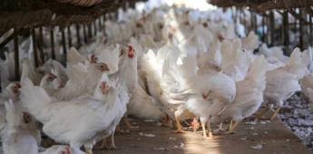 Baja California libre de gripe aviar, afirma secretaría del campo.