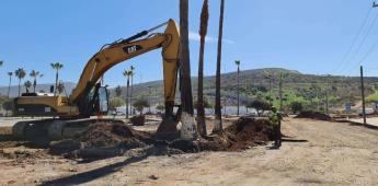 Remueve Servicios Públicos palmeras que obstruían la obra de continuación del bulevar Zertuche