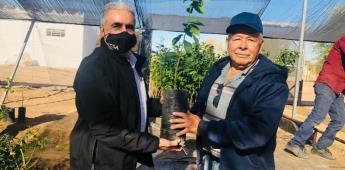 Secretaría del Campo entregó los primeros árboles de limón amarillo a productores