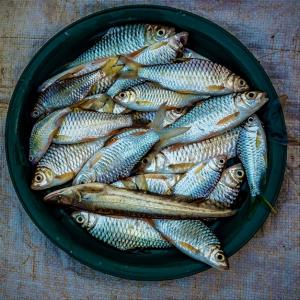 Por qué es bueno comer sardinas en esta Cuaresma