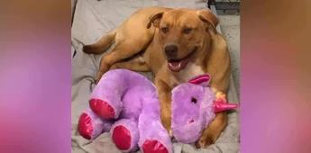 Perrito trató robar un peluche varias veces; ahora tiene un hogar y el juguete que tanto buscó