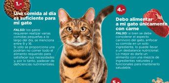 ¿Qué es verdad y qué no cuando quiero alimentar a mi gatito?
