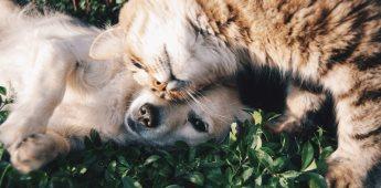 ¿Sabías que el asma afecta a humanos y animales de compañía?