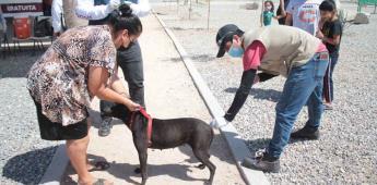 Continúan las acciones preventivas en contra de la Garrapata café del perro