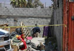 Aseguran 12 ejemplares de ajolote en Puebla