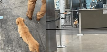 Perrito se hace viral al tratar cruzar la frontera