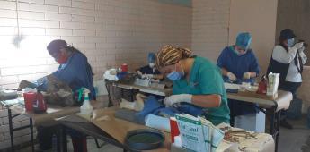 Secretaría de salud aplica a mascotas la vacuna antirrábica y esterilización canina