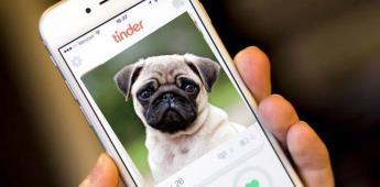 Para promover la adopción, crean perfiles de perros y gatos en Tinder