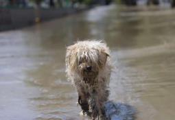 Damnificados corren a presidente municipal de Tula tras inundaciones.