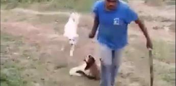 Hombre mata a machetazos a una perrita en calles de Iztapalapa