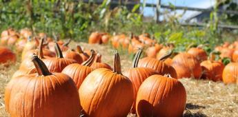 Cupones gratis para visitar Pumpkin Station en San Diego este octubre