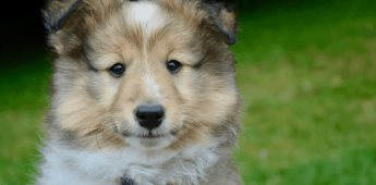 Crean el Registro Único de Animales en la CDMX