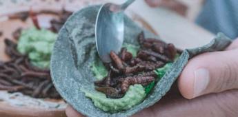 Se usan 26 variedades de insectos en la gastronomía de Oaxaca