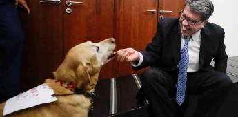 Senado no aprobará Ley de Bienestar Animal sin amplio consenso