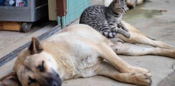 Por pandemia aumentó abandono de perros y gatos en Naucalpan