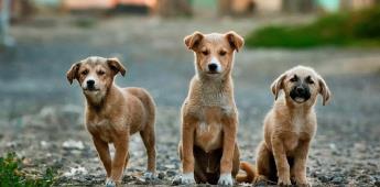 Mascotas abandonadas participan en el Fest Can